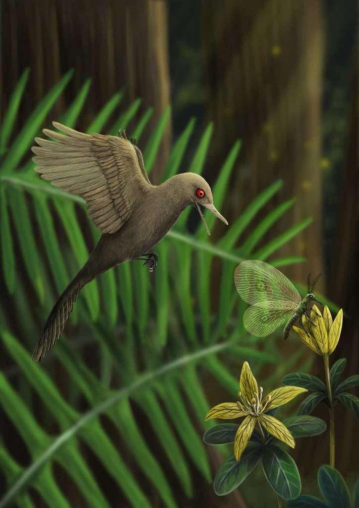 Contrairement au colibri, Oculudentavis khaungraae devait se nourrir d'insectes car son bec est muni d'une centaine de petites dents pointues. © HAN Zhixin, Los Angeles Natural History Museum, Nature Video, YouTube