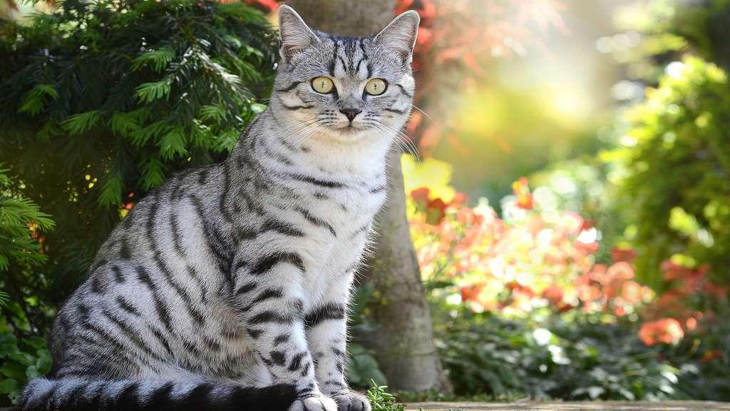 Un chat, entre noir et blanc