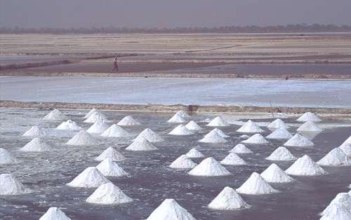 Sénégal : Récolte du sel dans les marais salants de Fatik. © IRD - Barrière, Olivier