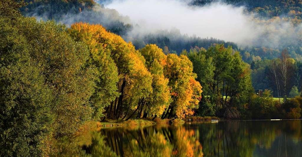 Quand l'automne arrive, la forêt tempérée se pare de belles couleurs. © Mikali, Pixabay, CC0 Creative Commons