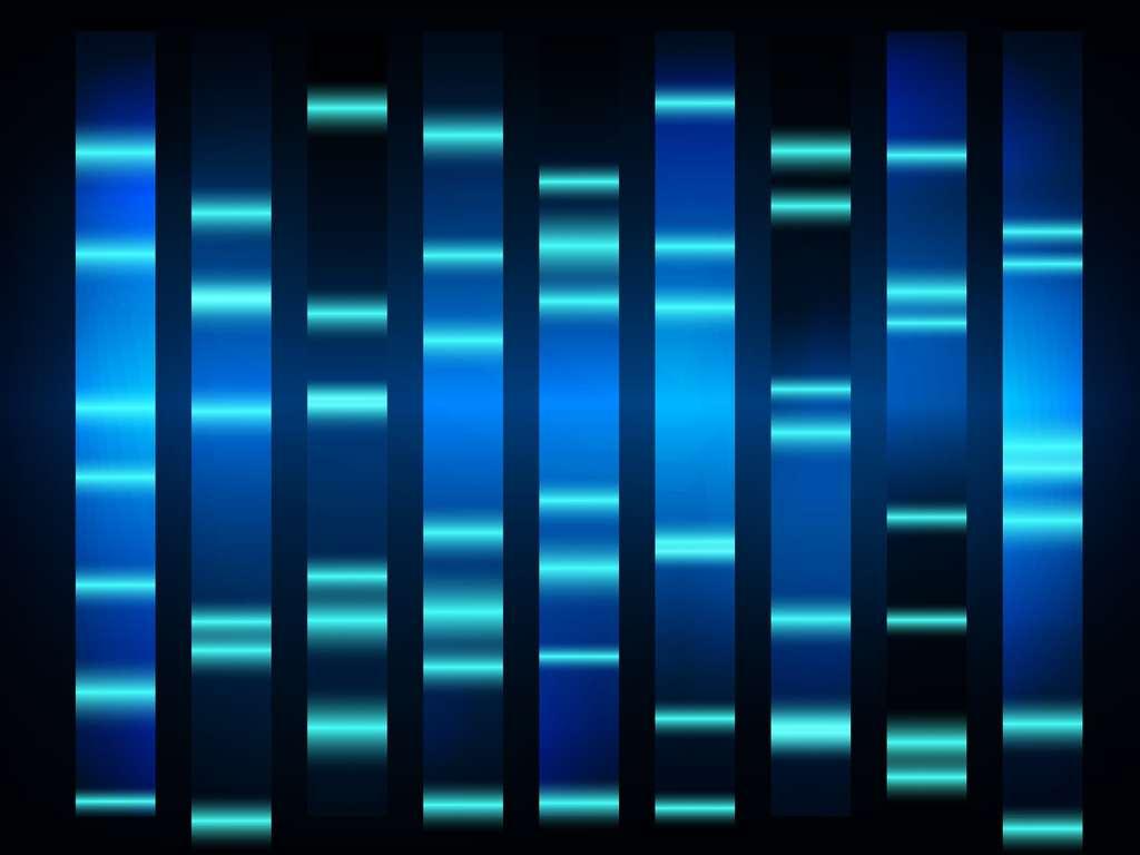 L'électrophorèse permet de séparer des ADN en fonction de leur taille. © T-flex, Shutterstock