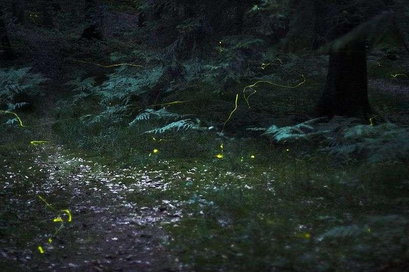 Vol de nuit (stries jaunes). © Quit007, GNU FDL Version 1.2
