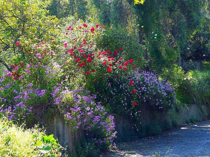 Un jardin du sud de la France, près de Nice