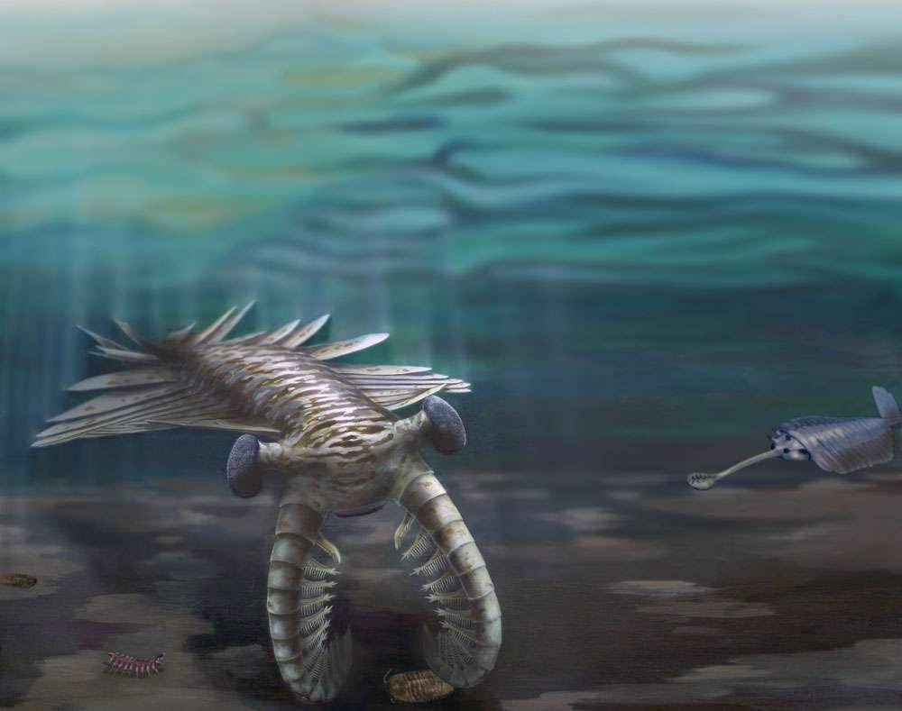 Cet Anomalocaris titillant un trilobite et l'Opabinia le regardant de loin (à droite de l'image) ont vécu voici 520 millions d'années. Ils sont apparentés aux arthropodes actuels. © Katrina Kenny et Nobumichi Tamura