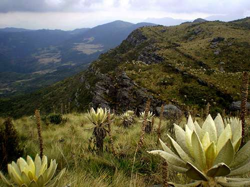 Paramo en Colombie. © Friedrich Kircher lic CC P 3.0