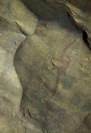 Fig. 11. Ce petit bison rouge vertical de Niaux (Galerie Profonde) a été peint en fonction d'une concavité de la roche - non peinte - qui évoquait la ligne de dos d'un bison. © Cliché J. Clottes. Tous droits réservés