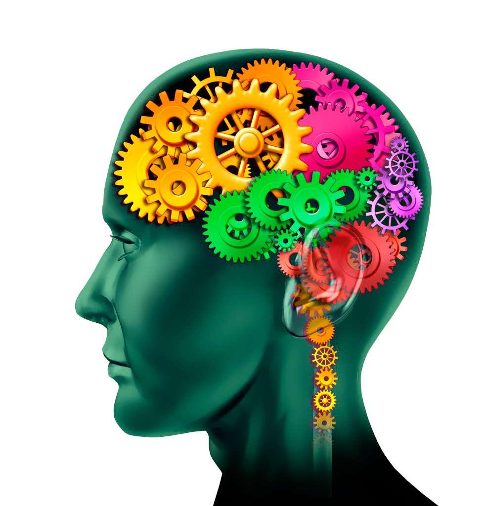 La mémoire est assurée par des connexions spécifiques entre certains neurones. C'est pourquoi les programmes de « gym cerveau » ne sont que des jeux. © DR