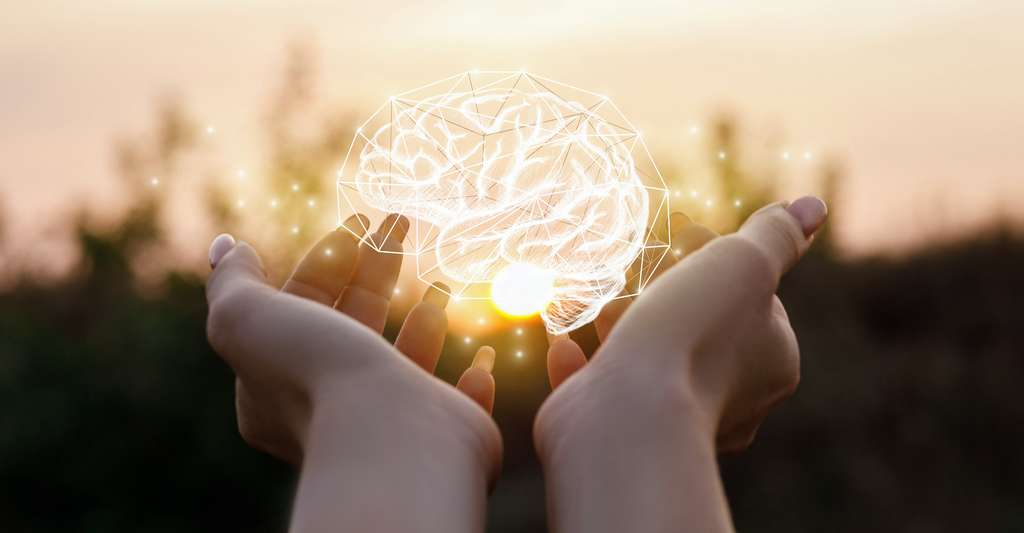 Les chercheurs de l'université de Tel-Aviv (Israël) montrent une baisse significative de la prévalence des animaux pesant plus de 200 kilogrammes, couplée à une augmentation du volume du cerveau humain. © natali_mis, Adobe Stock