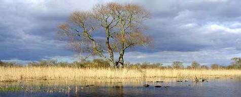 Lac de Grand-Lieu (44). © DR