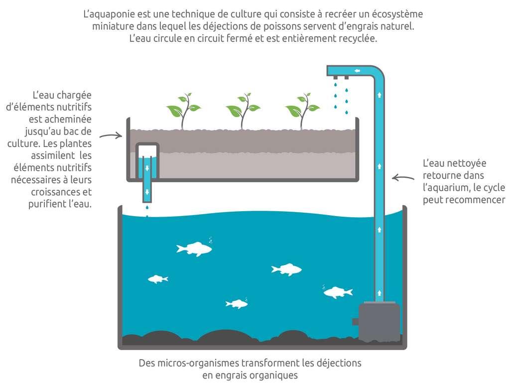 Schéma de fonctionnement de l'aquaponie © Fédération française d'auaponie (FFDA)