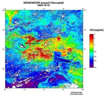 Mission KEOPS. Ces images fournies par les satellites d'observation de la couleur de l'eau montrent la floraison des algues microscopiques (artificiellement colorée en rouge sur l'image) autour des îles Kerguelen. © ACRI. MERIS. MODIS.