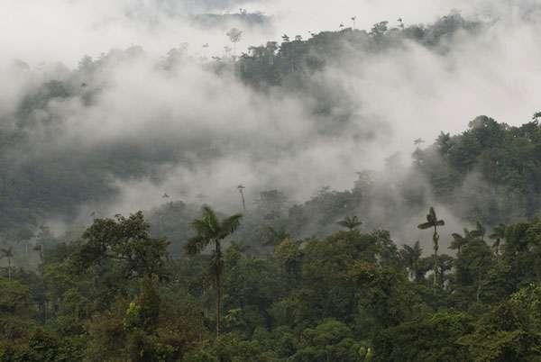 Canopée tropicale de la forêt de Bilsa, Équateur. © Sylvain Lefebvre et Marie-Anne Bertin, DR