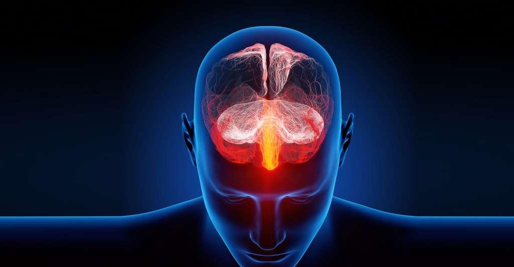 Description du système nerveux humain. © Ra2 studio – Fotolia.com