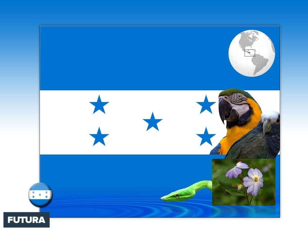 Drapeau : Honduras