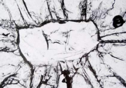 Une coésite dans un grenat fracturé d'éclogite