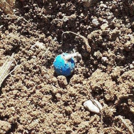 Une graine de betterave mesure 0,6 mm seulement. © Frédéric Choiselat