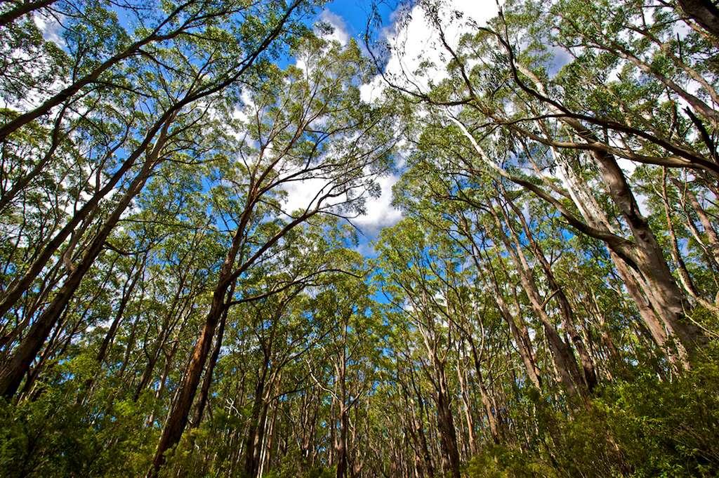 Forêt d'Australie. © stockvault.net libre droits
