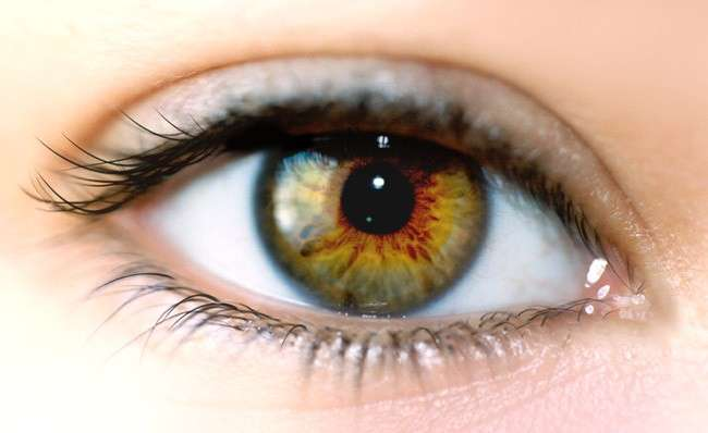 La cornée constitue une sorte de fenêtre par où la lumière s'engouffre. Elle passe ensuite au centre de l'iris et traverse le cristallin jusqu'à atteindre la rétine au fond de l'œil. Crédits DR