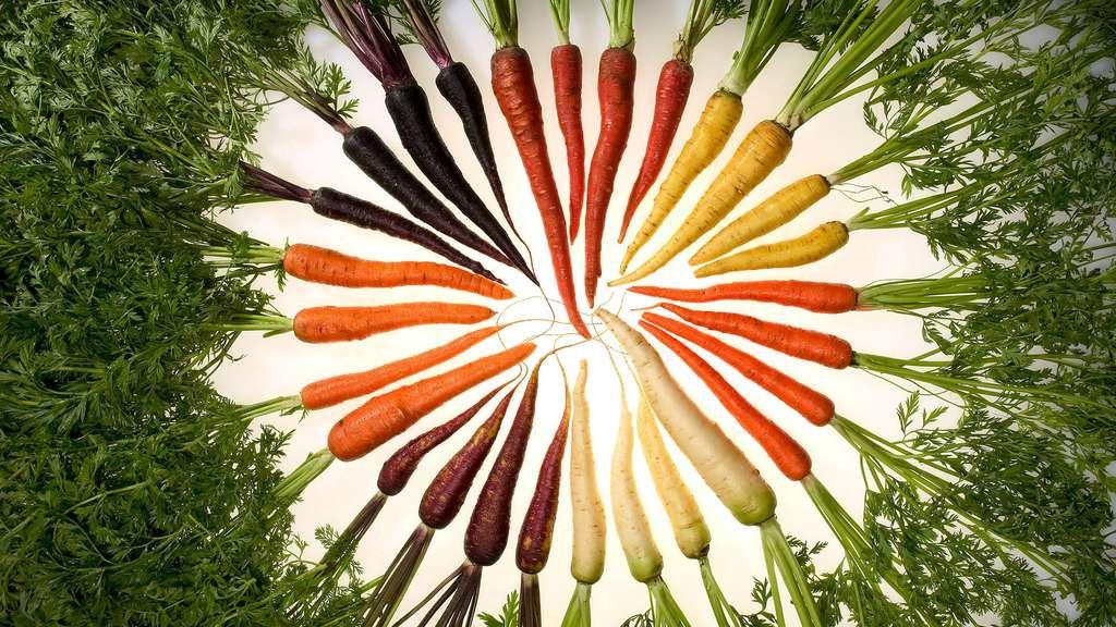 La carotte, pour une belle peau et de bons yeux