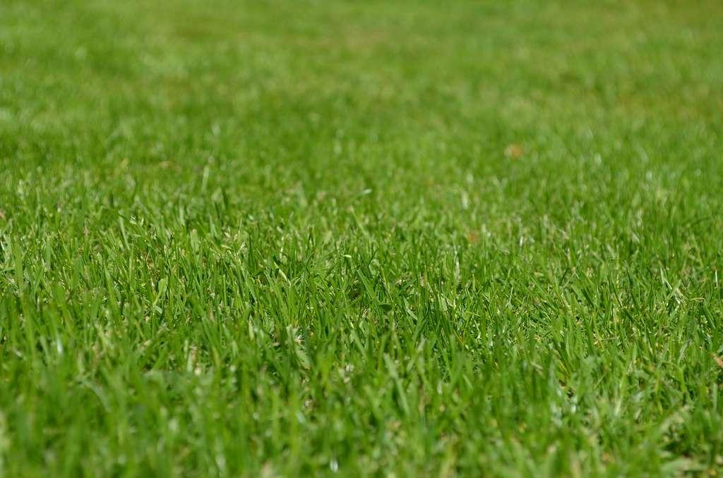 Les robots tondeuses utilisent la technique de tonte dite de mulching qui consiste à couper la partie supérieure du brin d'herbe en très petites sections qui retombent au sol pour former un fertilisant naturel. © Huskyherz, CC0 DP via Pixabay