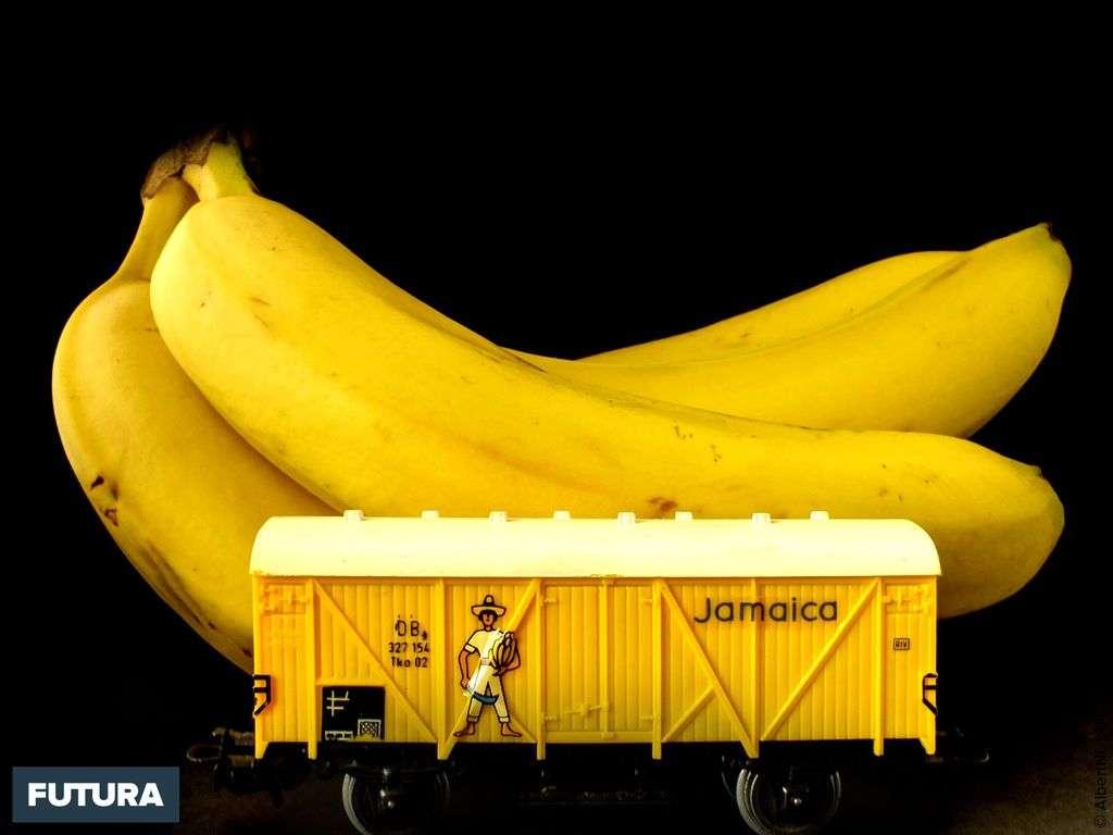 Bananes de la Jamaïque