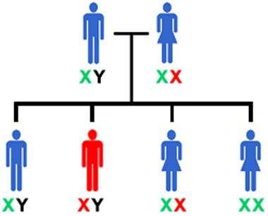Qu'est-ce que l'empreinte génomique ? © DR