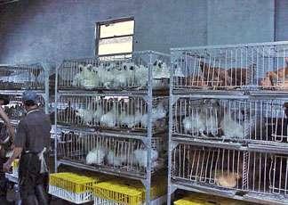 Les exploitations avicoles sont réglementées. © www.news.cornell.edu