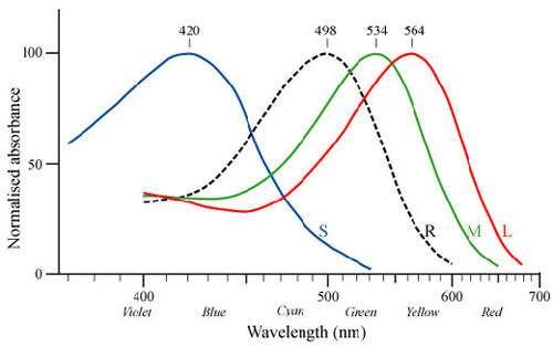 Spectre d'absoption de la lumière par les cônes. © Reproduction et utilisation interdites