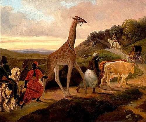 Le Passage de la girafe près d'Arnay-le-Duc, tableau de Jacques Raymond Brascassat (1827). Musée des beaux-arts de Beaune, Wikimedia commons, DP