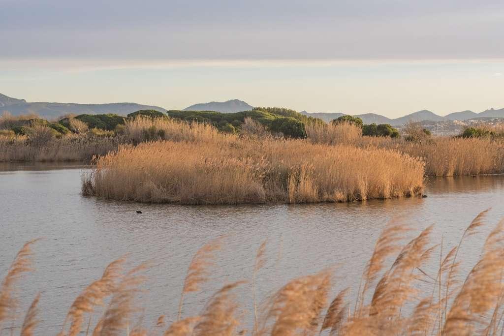 Les étangs de Villepey bordés de roseaux. © Robin Hacquard