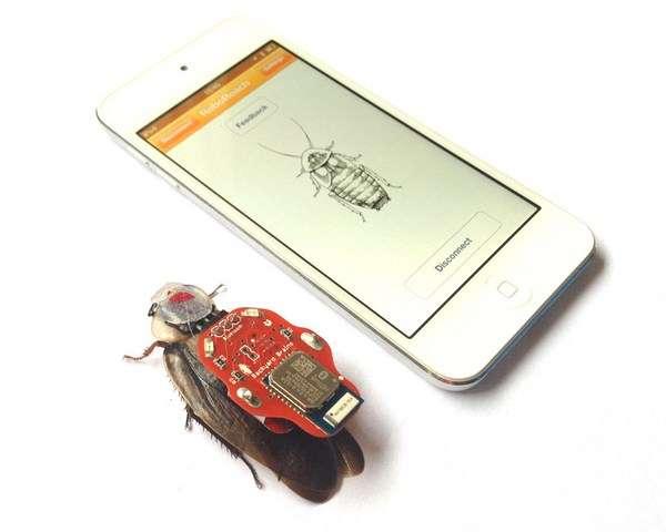 Il y a deux ans, une start-up nord-américaine Backyard Brains a commercialisé le kit Roboroach grâce auquel n'importe qui peut installer un système de contrôle sur une blatte vivante et la piloter avec son smartphone. Ce produit à vocation pédagogique a suscité presque autant de soutiens que de détracteurs. © Backyard Brains