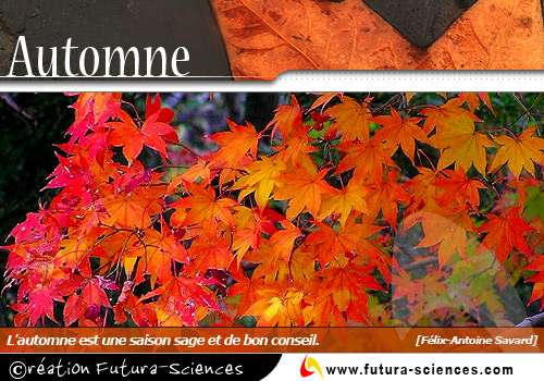 L'automne féerie de couleurs