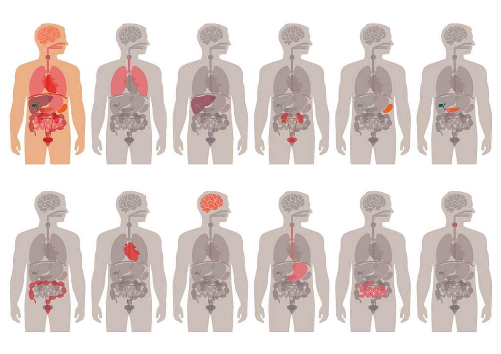 Une personne sur 5.000 à 10.000 souffre d'une pathologie d'asymétrie droite/gauche. © eveleen007, Fotolia