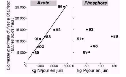 Figure 6. Relations empiriques entre les flux d'azote et de phosphore apportés par les rivières en juin dans le sud de la Baie de Saint-Brieuc et le maximum annuel de biomasse atteint en juillet sur ce site.