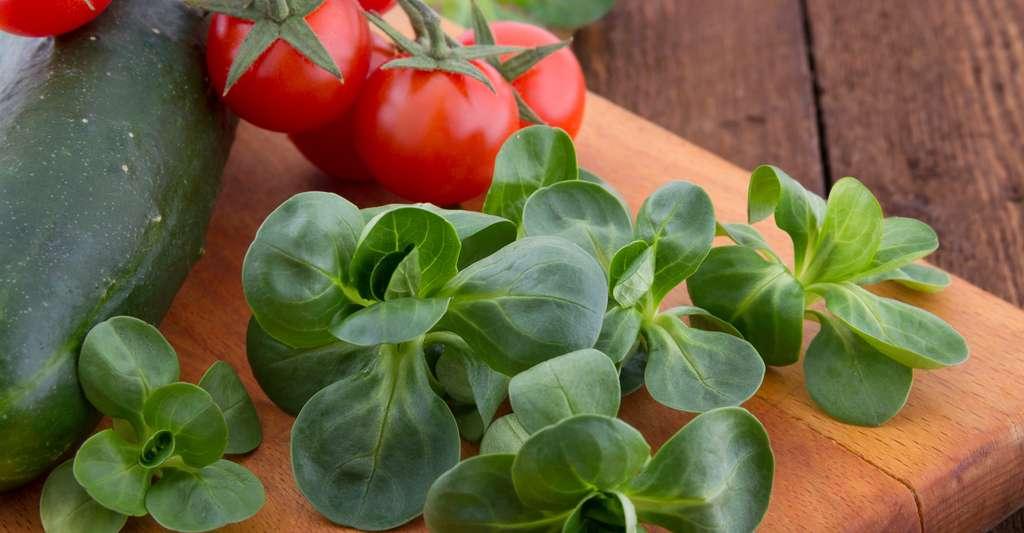 Très goûteuse, la mâche s'accommode parfaitement en salade, avec des tomates et de la mozzarella. © Kalavati, Shutterstock