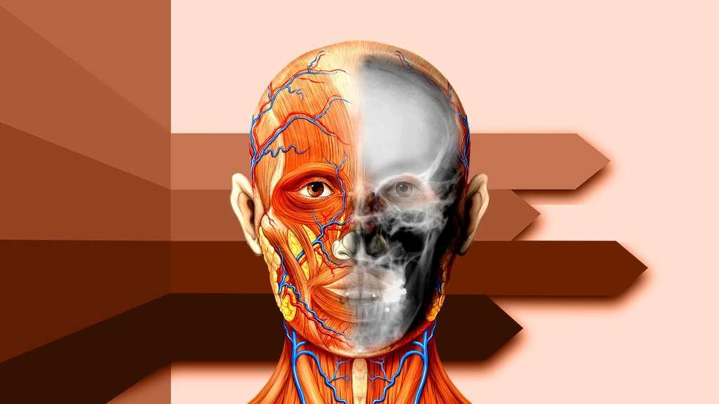 Anatomie de la tête et radiographie