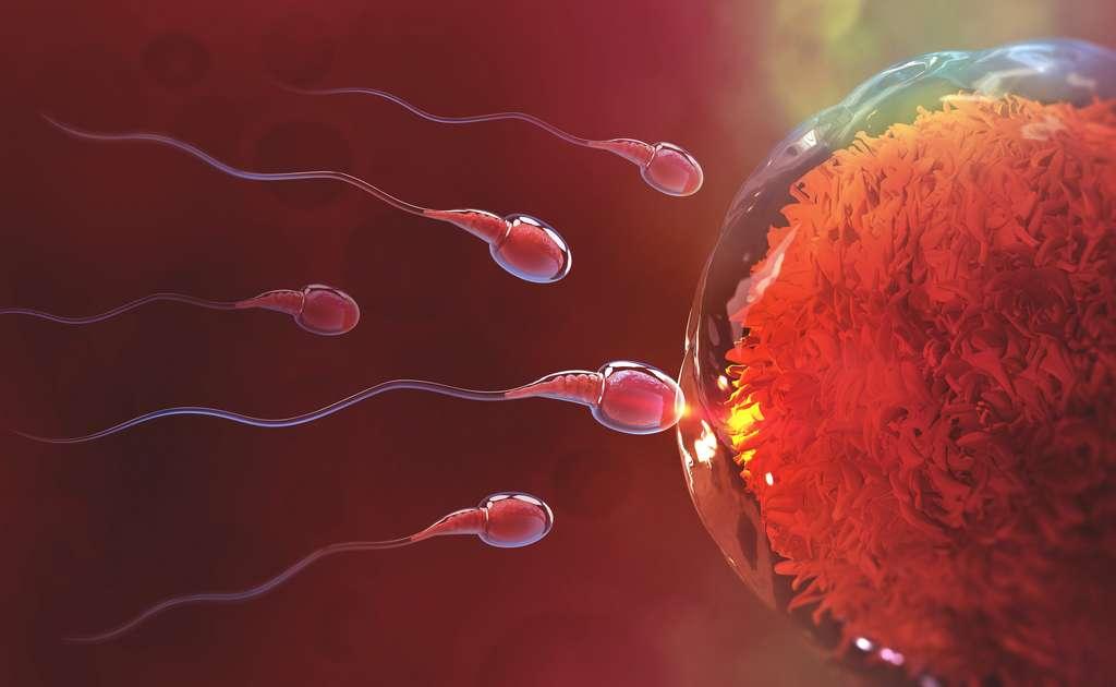 Chez nos ancêtres, l'homosexualité a-t-elle pu être synonyme de reproduction ? © Siarhei, Adobe Stock