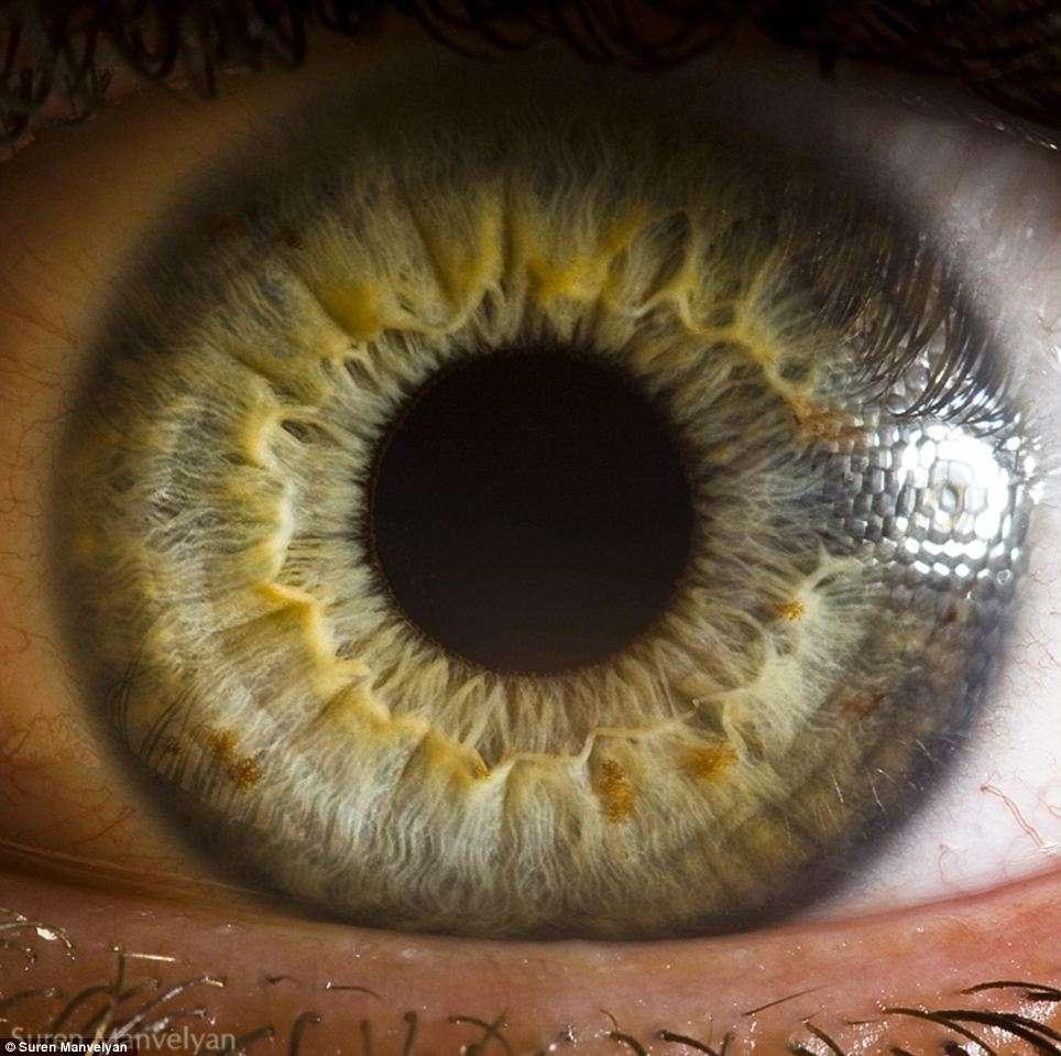 La nutrition de l'iris est assurée par la solution aqueuse dans laquelle il baigne, et par quelques petites artérioles. © Suren Manvelyan