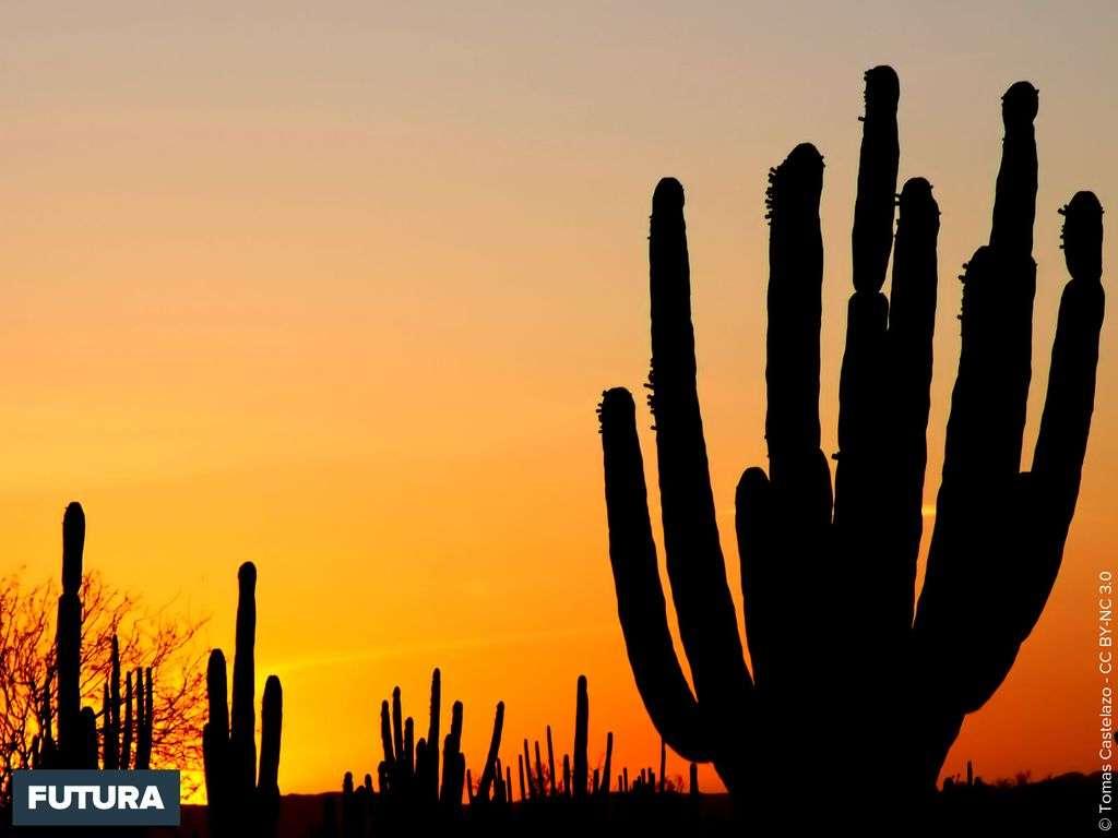 Coucher de soleil dans le désert de Sonora - Mexique