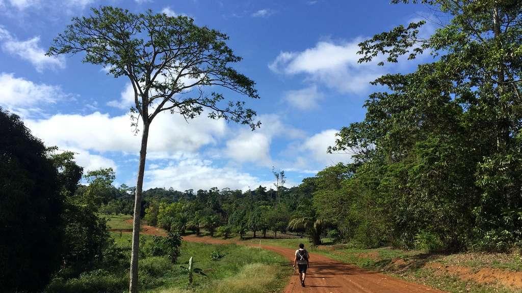 Le Parc amazonien de Guyane, l'un des plus grands espaces protégés du monde