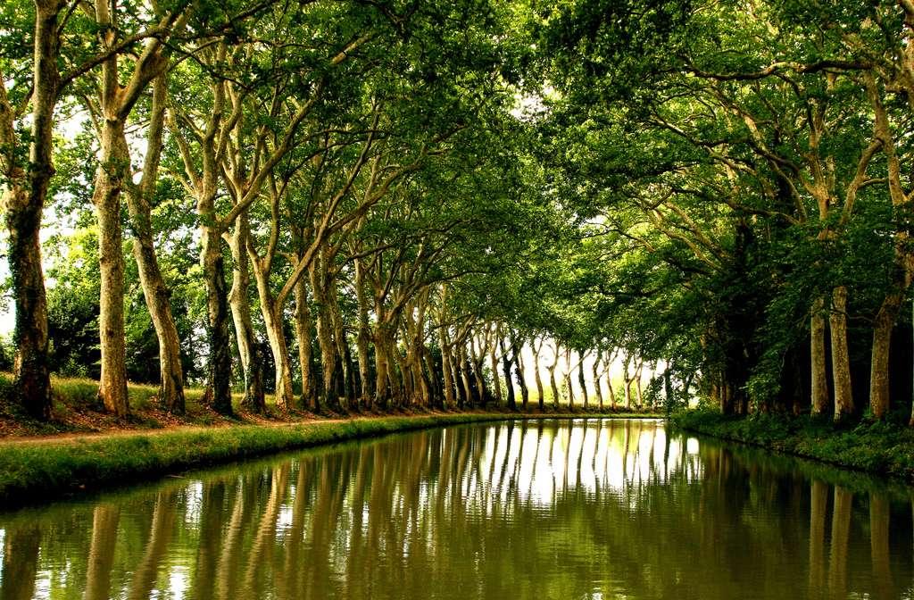 Les alignements de platanes le long du canal du Midi forment une voûte arborée qui fait le charme du site. © Thomas Claveirole, Flickr, cc by sa 2.0