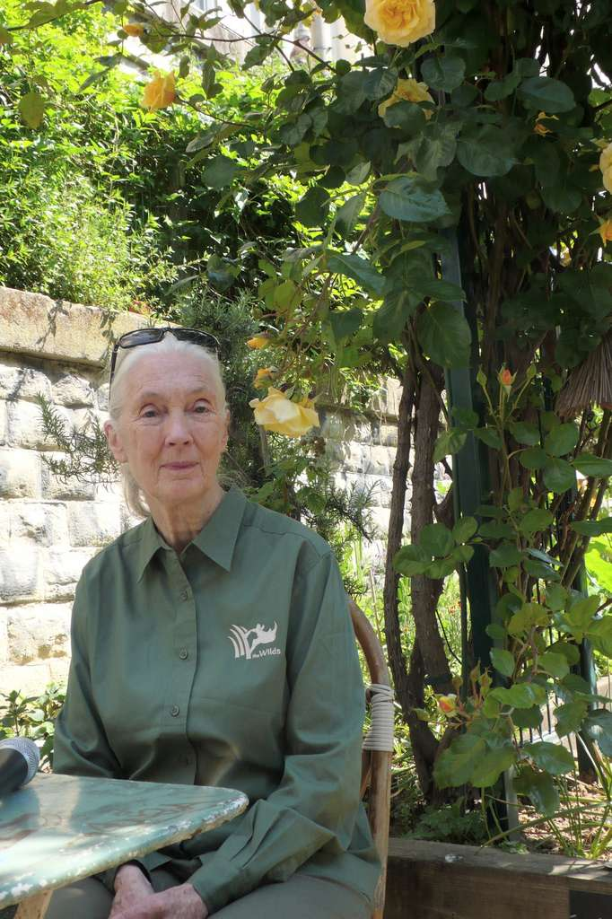 Jane Goodall, le 18 mai 2014, fait une pause à Paris, dans le jardin du Ruisseau, où l'on fleurit une partie de l'ancienne ligne de train dite de la Petite Ceinture. La Britannique vient y rencontrer des membres français de son institut. © Jean-Luc Goudet, Futura-Sciences