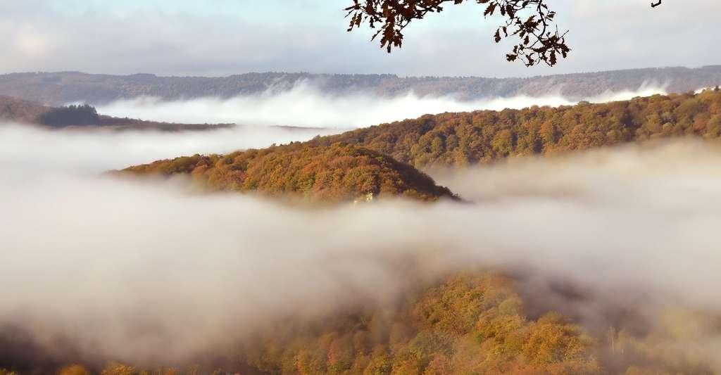 Paysage des Ardennes. © Mrs Brown, Pixabay, DP