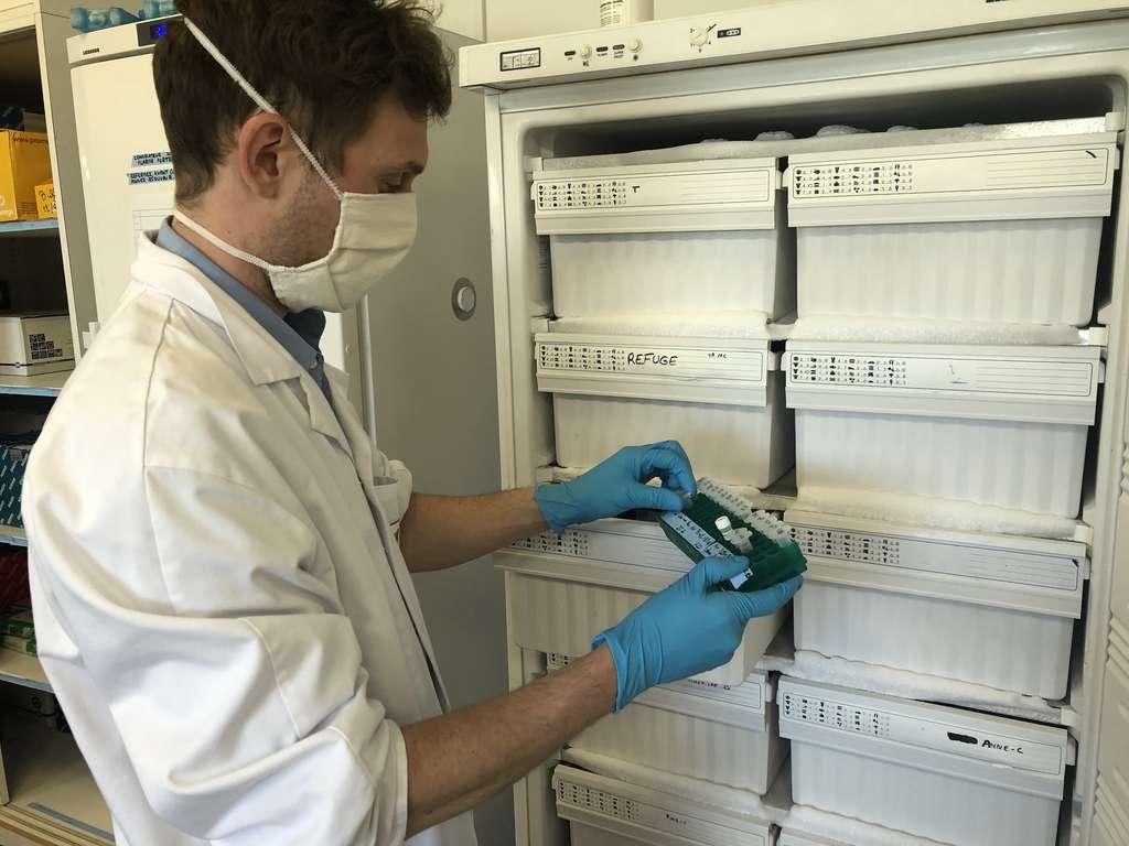 Dylan Gallo commence sa thèse au Cirad par une part de bibliographie et une part d'expériences en laboratoire. © Eléonore Solé