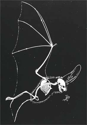 Squelette en vol.