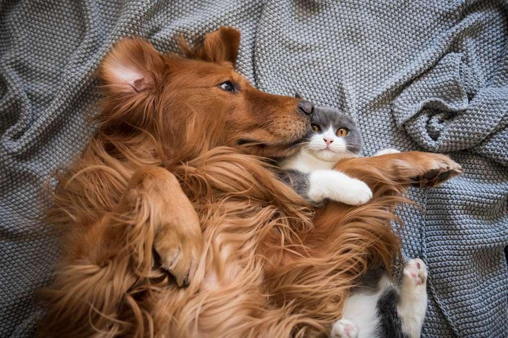 Une association entre diabète chez l'animal et diabète chez le propriétaire n'est visible que chez les propriétaires de chiens. © Chendongshan, Adobe Stock