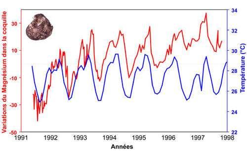 Variations cycliques du magnésium (en rouge, variation autour de la moyenne) au sein de la coquille du bivalve Isognomon isognomon (Kenya) et température de l'eau enregistrée pendant la croissance de l'organisme. On voit que le Mg suit globalement bien la température de l'eau. On remarque une augmentation de la teneur en Mg au cours du vieillissement de l'animal (augmentation ontogénique). Modifié d'après Lazareth et al., 2003 © C. E. Lazareth et co-auteurs. Reproduction et utilisation interdites