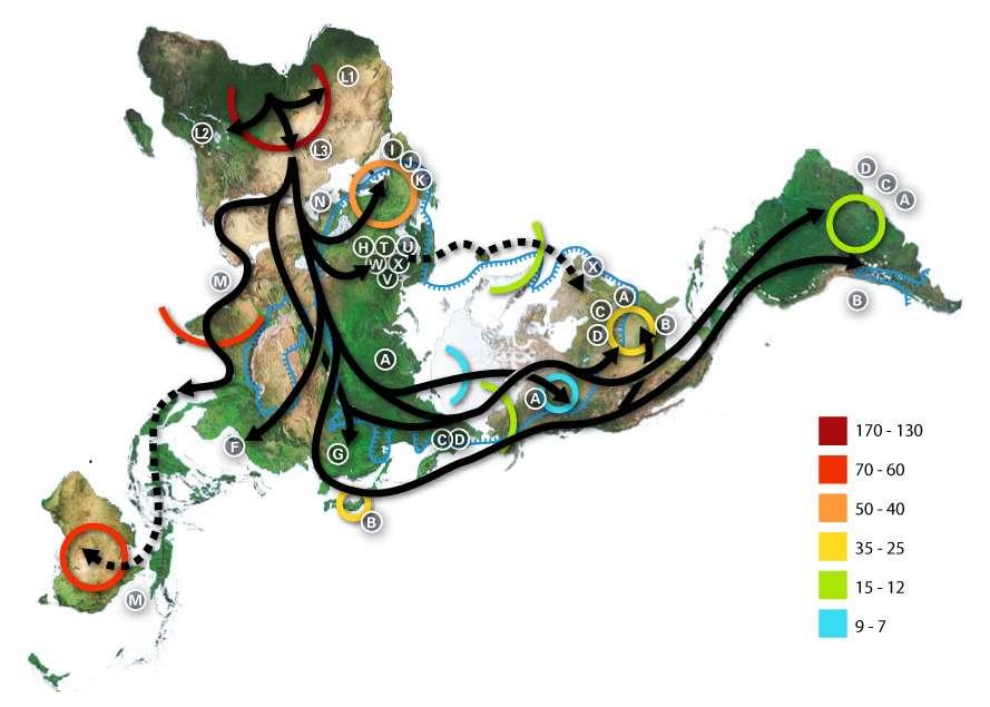 Carte des migrations d'Homo sapiens à partir de l'Afrique sub-saharienne (dressée par datation au radiocarbone des crânes et autres ossements). Les graduations sont mentionnées en milliers d'années avant notre ère. © GNU Free Documentation License