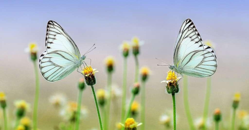 Selon une étude, l'état de la biodiversité des insectes est «épouvantable» et leur biomasse diminue d'environ 2,5 % par an. © ROverhate, Pixabay, CC0 Creative Commons