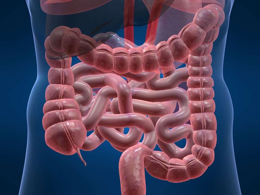 Les chercheurs français ont détecté la mutation d'une protéine dans les cas de cancers du côlon. © Sebastian Kaulitzk, Fotolia